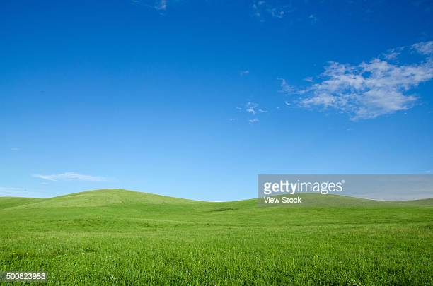inner mongolia,china - grass area stock pictures, royalty-free photos & images
