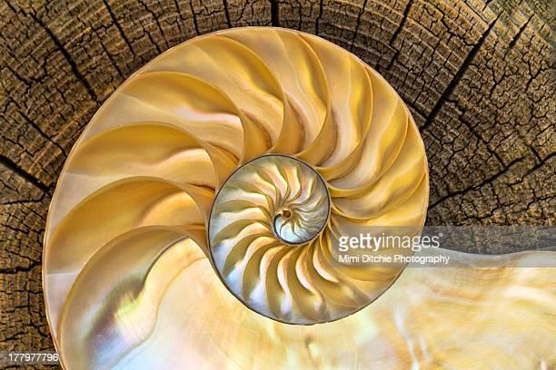inner nautilus - nautilus stock pictures, royalty-free photos & images