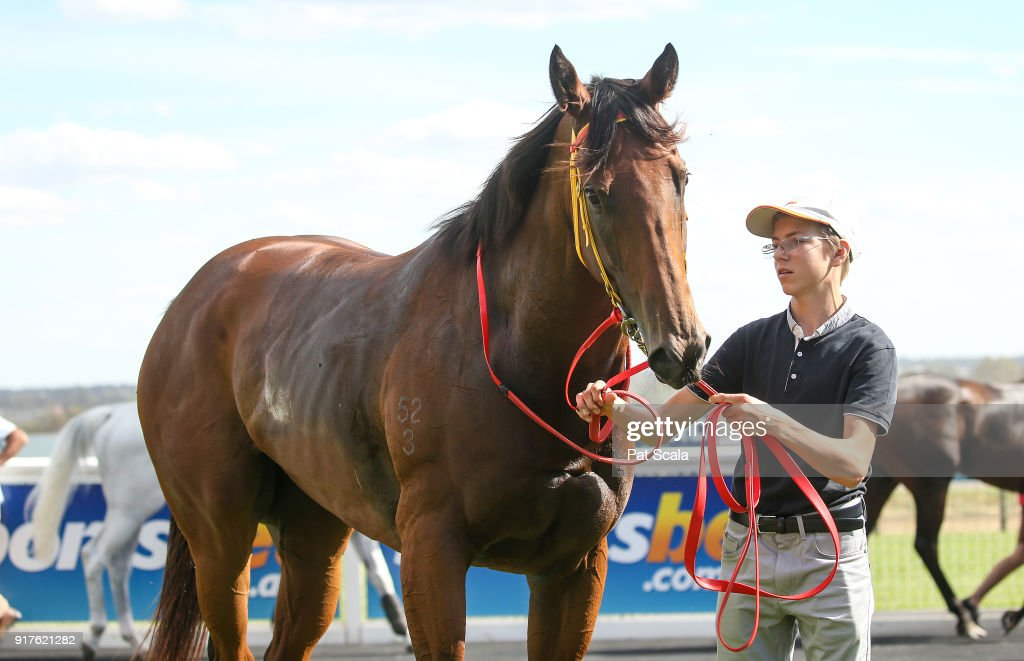 Innocent Lily after winning Hygain Winnerâs Choice BM58 Handicap,at Sportsbet-Ballarat Racecourse on February 13, 2018 in Ballarat, Australia.