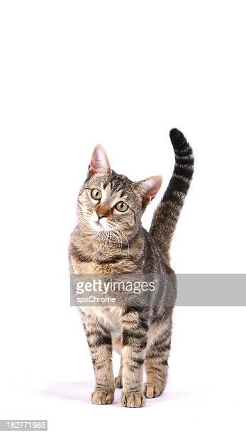 inquisitive cat - cat family stock pictures, royalty-free photos & images