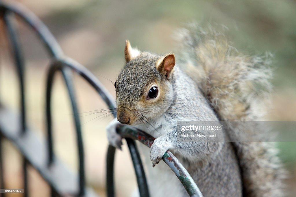 Inquisitive Squirrel : Stock Photo