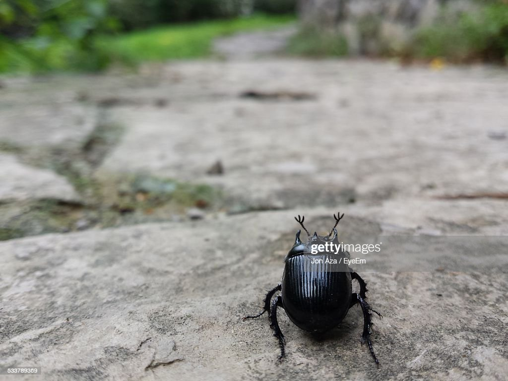 Insect Crawling On Footpath : Foto stock