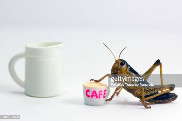 insect drinking a cup of coffee with milk - cockroach stock photos and pictures