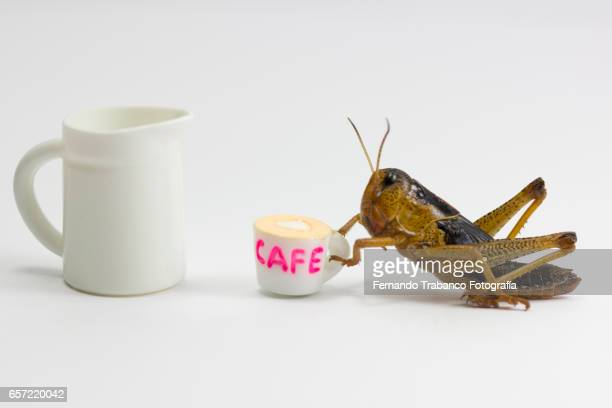 insect drinking a cup of coffee with milk - funny wake up stock pictures, royalty-free photos & images