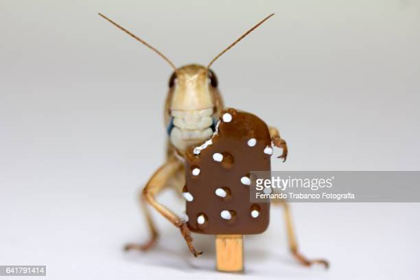 Insect eating chocolate ice cream and whipped cream in hot summer
