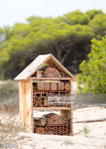 Insect hotel attached to a pine tree trunk in an area of sand dunes, Pinet Nature Reserve, Valencian Community, Spain.