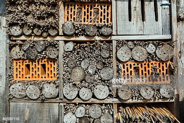 Insect hotel for solitary bees and artificial nesting place for other insects / invertebrates offering nest holes in hollow stems bricks and wood...