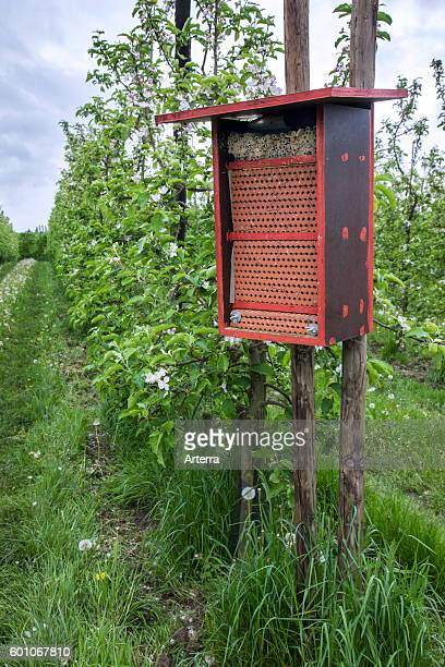 Insect hotel for solitary bees offering nest holes in flowering orchard in spring