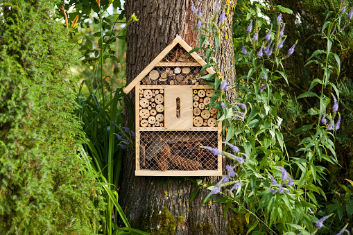 Insect house 578820216