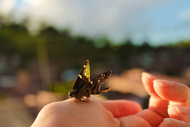 Insect in palm of hand