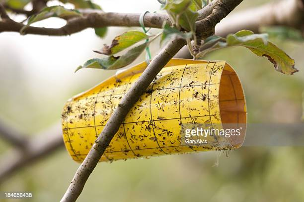 Insect monitoring trap