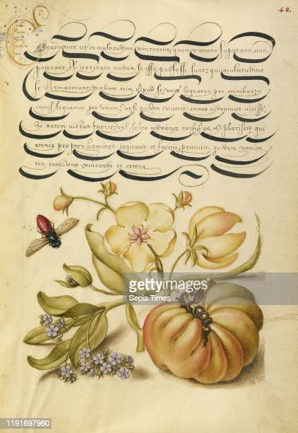 Insect Moth Mullein ForgetMeNot and Tomato Joris Hoefnagel and Georg Bocskay Vienna Austria 1561 1562 illumination added 1591 1596 Watercolors gold...