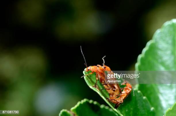insect on a flower - begattung kopulation paarung stock-fotos und bilder