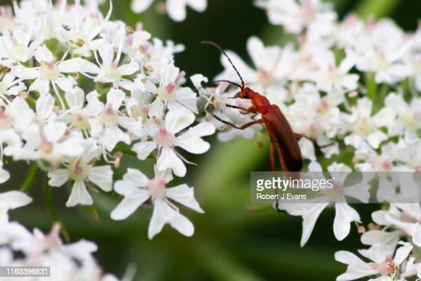 insect on a plant around harthill ponds - south yorkshire stock pictures, royalty-free photos & images