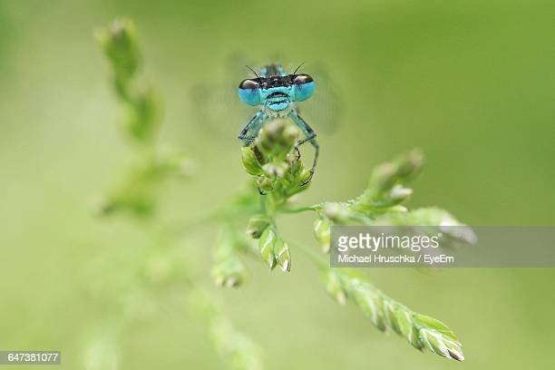 insect on flower bud - michael hruschka stock pictures, royalty-free photos & images