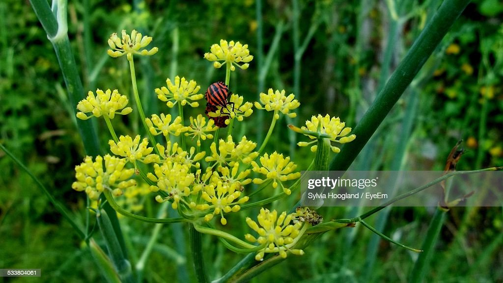 Insect On Flower : Foto stock