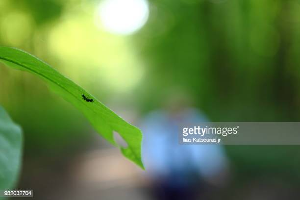 Insect on leaf, defocused forest in the background