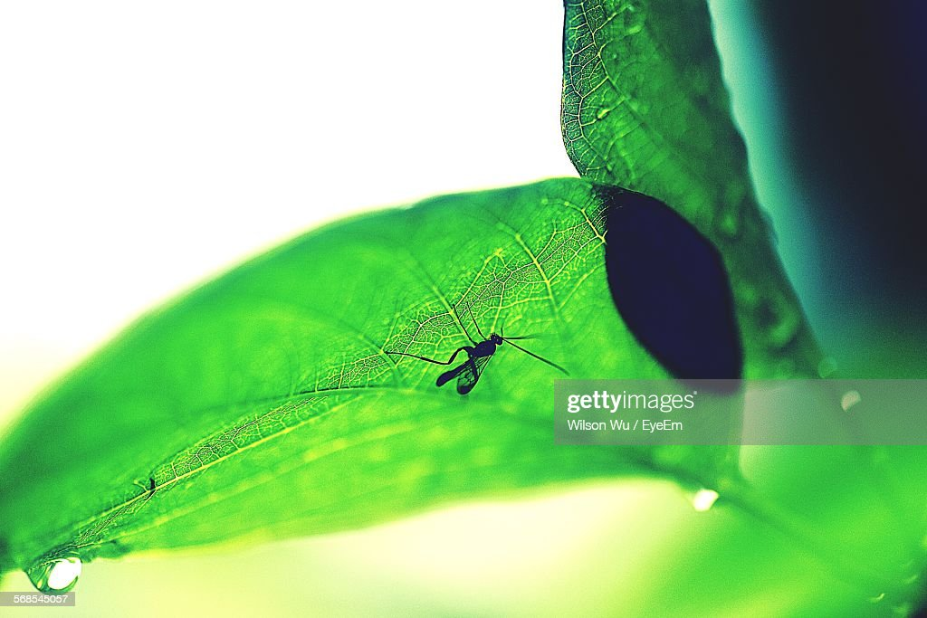 Insect On Plant During Rainy Season : Stock Photo