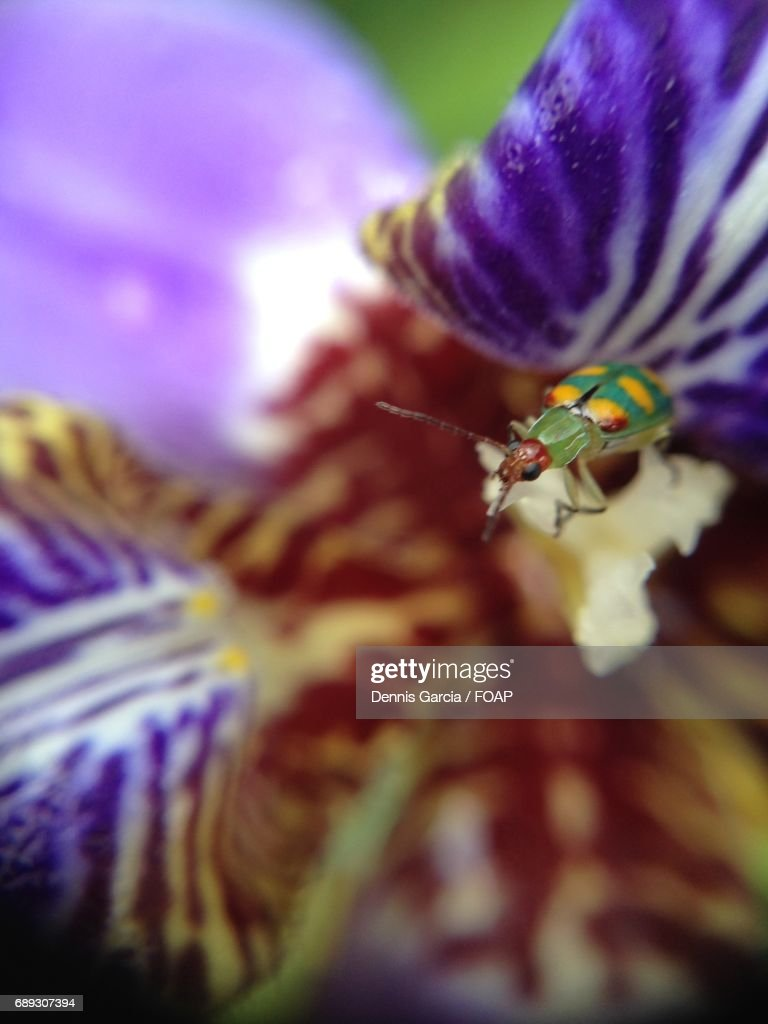 Insect on the flower : Stock Photo