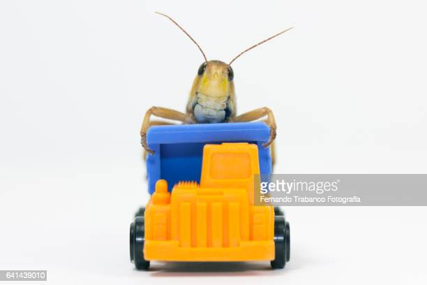 Insect on top of a truck