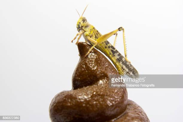 Insect on top of poop