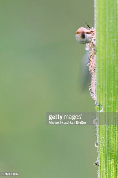 insect on wet blade of grass - michael hruschka stock pictures, royalty-free photos & images