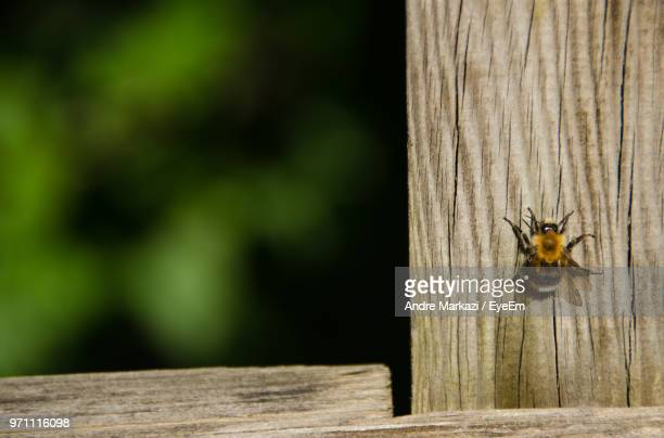 Insect On Wooden Wall