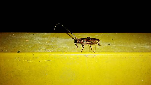 Insect On Yellow Retaining Wall At Night