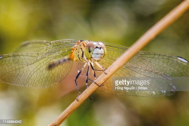 insect photo - mayfly stock pictures, royalty-free photos & images