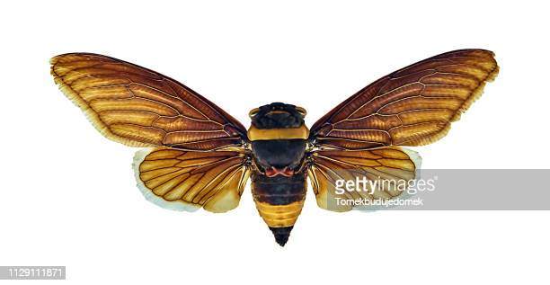 insect - weiß stock pictures, royalty-free photos & images