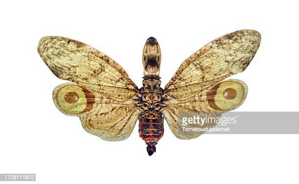 insect - klein foto e immagini stock