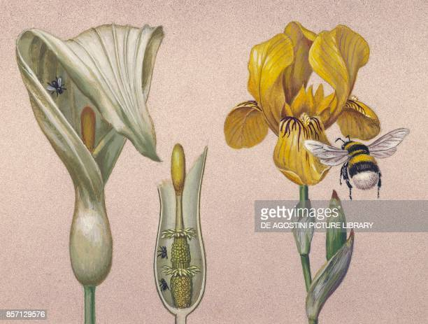 Insect pollination drawing