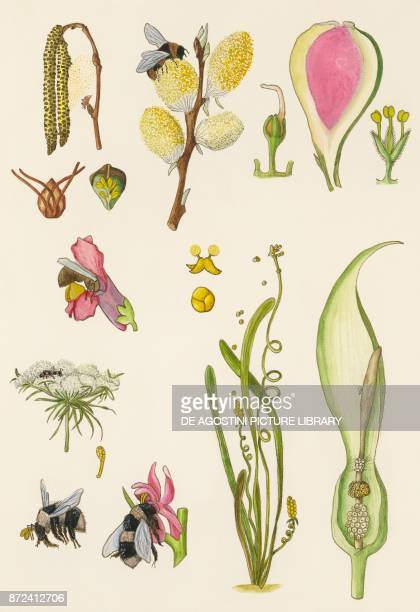Insect pollination of plants drawing