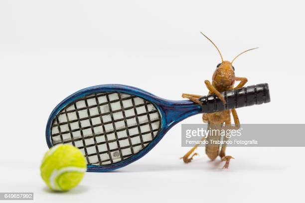 Insect strikes the ball with a racket of tennis