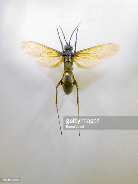 Insect with spread wings