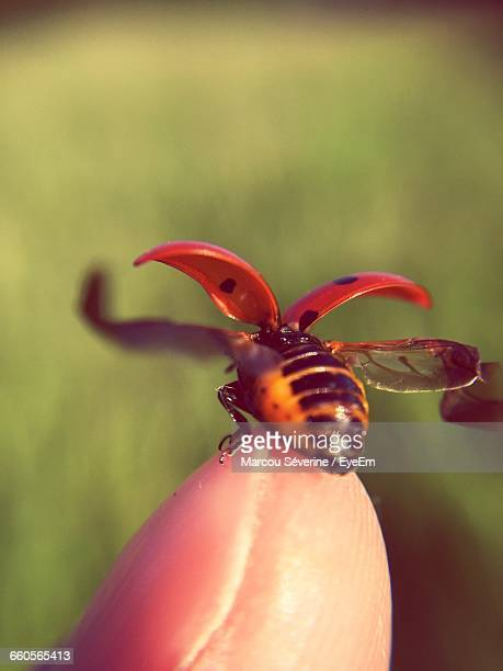 Insects On Finger Tip