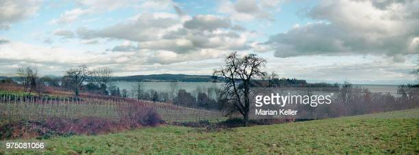 insel mainau - insel stock pictures, royalty-free photos & images