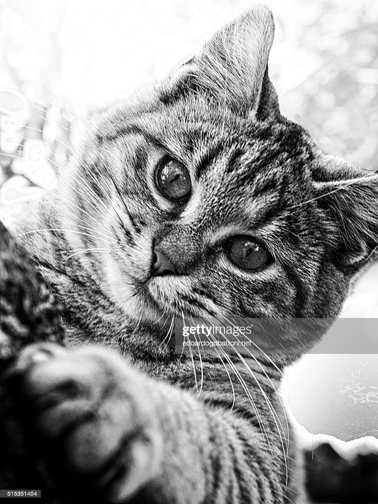 inside a cat's eyes you get lost : Foto stock
