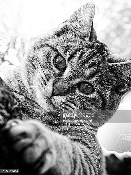 inside a cat's eyes you get lost - edoardogobattoni stock pictures, royalty-free photos & images