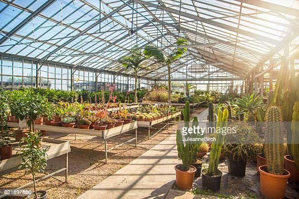 inside a tropical greenhouse - botánica fotografías e imágenes de stock