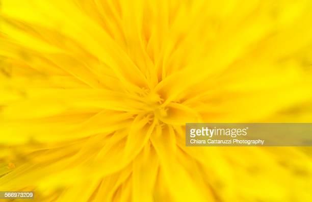 Inside a yellow flower