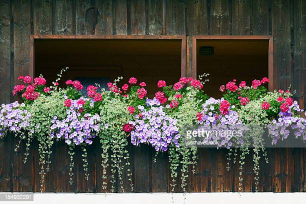 inside balcony decorated with crane's bill and petunias - geranium stock pictures, royalty-free photos & images