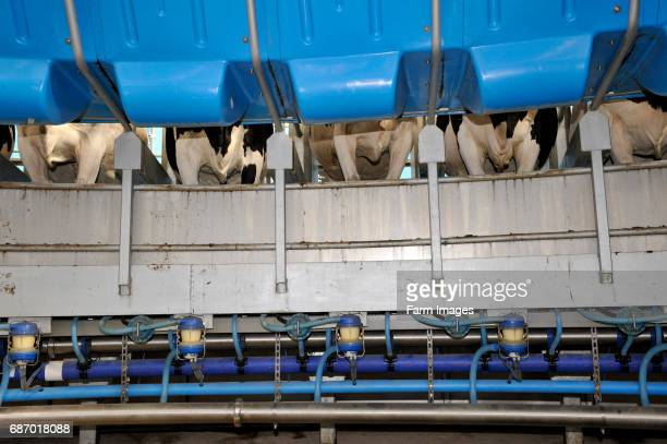Inside of a rotary parlour showing milking equipment and pipework