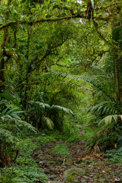 Inside of cloud forest in La Amistad National Park.
