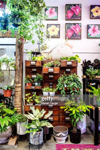 Inside Tansy, a heartfelt home decor, and plant store co-owned by best friends Shawna Christian and Colette Flower located in Burbank on Tuesday,...