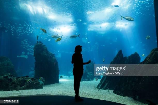 Inside the acquarium