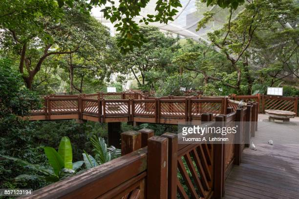 inside the aviary at the hong kong park - zoo stock pictures, royalty-free photos & images