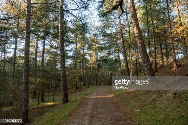 Inside the forest of Nationaal Park Zuid-Kennemerland is a Dutch National Park between Bloemendaal and the North Sea Canal established in 1950, near...