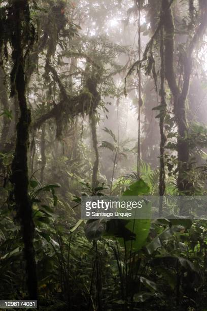 inside the rainforest at braulio carrillo national park - biodiversity stock pictures, royalty-free photos & images