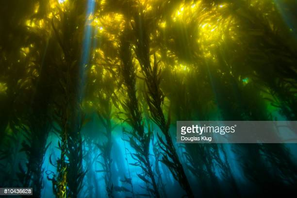 Inside the Underwater Forest